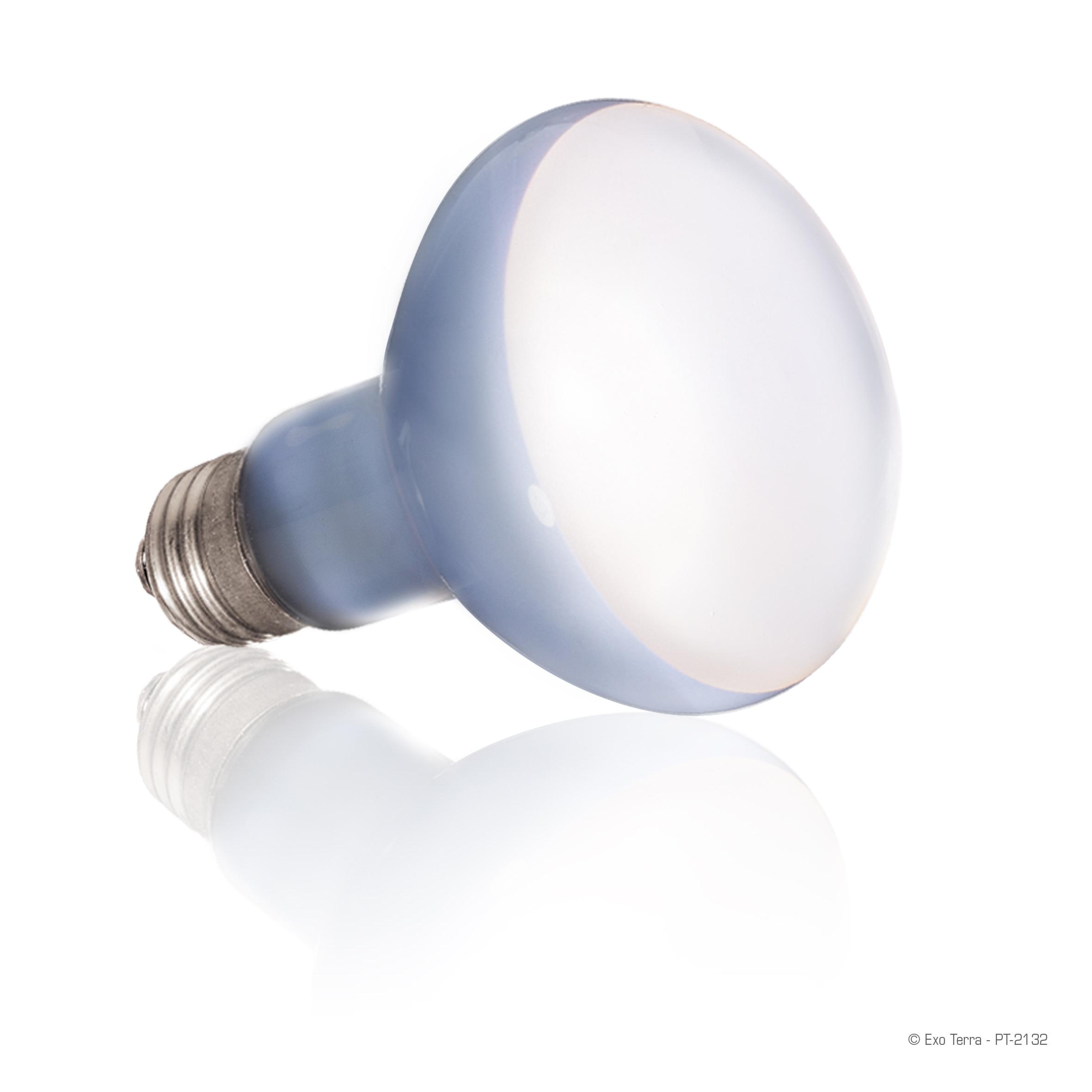 Exo Terra Daylight Basking Spot Lamp 75W - Walmart.com - Walmart.com