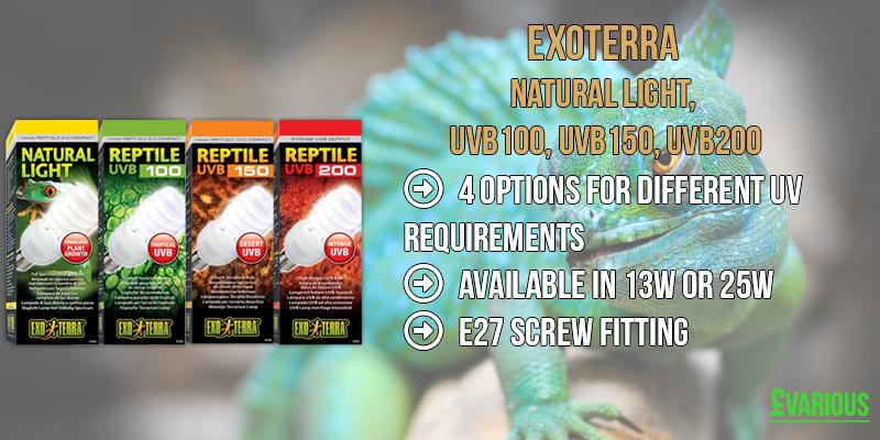 Reptile UV Lighting Options - Fluorescent and Compact Bulbs | Aquapet Blog