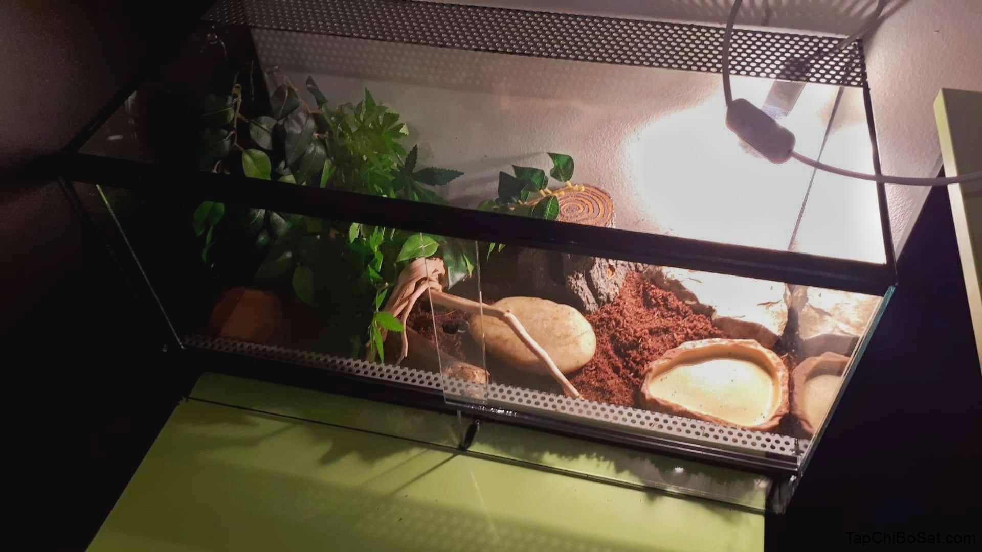 Rate my Pictus gecko setup : geckos